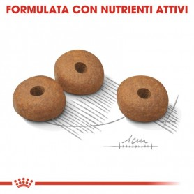 PURINA Pro Plan Medium Adult Sensitive OptiDerma con Salmone 16,5 kg (14 kg + 2,5 kg Omaggio)